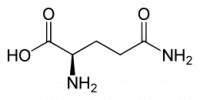 "D-Glutamine, structure. (fichier Commons : ""D-Glutamine.svg"") (domaine public) Yikrazuul, 2008"