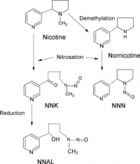 "Nicotine : formation de nitrosamines spécifiques du tabac. (fichier Commons : ""Endogenous_Formation_of_Tobacco-specific_N-nitrosamines_(TSNA)"") - licence CC-BY-SA 4.0 (https://creativecommons.org/licenses/by-sa/4.0/) Sanner Tore et Grimsrud Tom K., 2015"