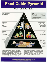 "Pyramide des besoins alimentaires humains. Center for Nutrition Policy. Food, Nutrition, and Consumer Services. (fichier Wikimedia Commons : ""Food_Guide_Pyramid-_A_Guide_to_Daily_Food_Choices_-_NARA_-_5710010"") (domaine public) Department of Agriculture, 1992"