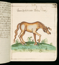 "Obstruction intestinale ou constipation d'un cheval. In ""Rossarzneibuch"" vol. 1. (fichier Wikimedia Commons : ""When_a_horse_is_unable_to_defecate_(constipation,_intestinal_blockage)."") (domaine public) Nitzschwitz Walter von., sans date"