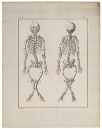 "Rachitisme humain. In University of Amsterdam(fichier Wikimedia Commons : ""Homo_sapiens_-_Rachitis_-_1700-1880_-_Print_-_Iconographia_Zoologica_-_Special_Collections..._UBA01_IZ19600214.tif"") (domaine public) Iconographia Zoologica, avant 1880"