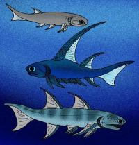 "Acanthodiens, poissons fossiles du Dévonien, en Angleterre et en Ecosse. (fichier Commons : ""572px-Mesacanthus_Parexus_Ischnacanthus"") - licence CC-BY-SA 3.0 (https://creativecommons.org/licenses/by-sa/3.0/) Јованвб, 2008"