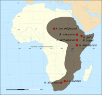 "Australopithèques et paranthropes : sites de fossiles. (fichier Commons : ""Map_of_the_fossil_sites_of_the_early_hominids_(4.4-1M_BP).svg"") - licence CC-BY-SA 3.0 (https://creativecommons.org/licenses/by-sa/3.0/) Kameraad Pjotr et Sting, 2009"