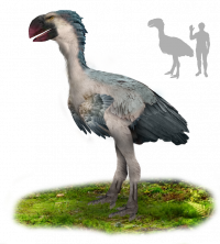 "Gastornis, reconstitution. (fichier Wikimedia Commons : ""Gastornis"") - licence CC-BY-SA 4.0 (https://creativecommons.org/licenses/by-sa/4.0/) Bertelink Tim, 2016"