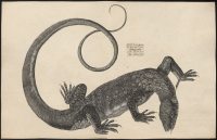 "Varan du Nil. (fichier Wikimedia Commons : ""Varanus niloticus - 1700-1880 - Print - Iconographia Zoologica - Special Collections University of Amsterdam - UBA01 IZ12400051.tif"") (domaine public) Iconographia Zoologica, Musée d'Amsterdam, 1700-1880"