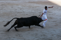 "Course camarguaise : razet réussi. (fichier Commons : ""Course_camarguaise_Razet_réussi"") - licence CC-BY-SA 2.0 (https://creativecommons.org/licenses/by-sa/2.0/) Graphia, 2011"
