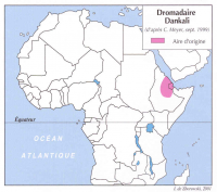Dromadaire Dankali, carte de répartition. Meyer Christian, 1999