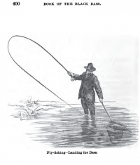 "Pêche à la mouche d'un poisson-soleil (black-bass) In ""Fly Fishing - Landing the Bass"" depuis ""Henshall, Book of the Black Bass"" (fichier Wikimedia Commons : ""Henshall-Fly_Fishing-Landing"") (domaine public) Cline Mike, 1881"