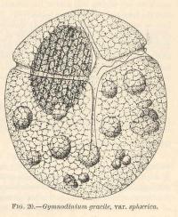 La verdure des parasites