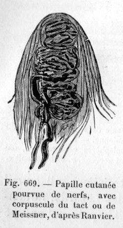 Les parasites et le nettoyage de cognac des parasites