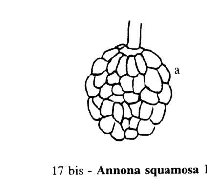 Pomme Cannelle Dictionnaire Des Sciences Animales