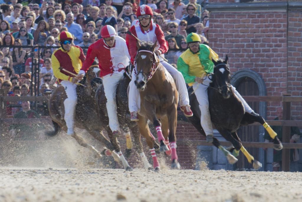 Al p pin mettre son cheval en pension quel prix pour quels services - Mettre du crottin de cheval dans son jardin ...